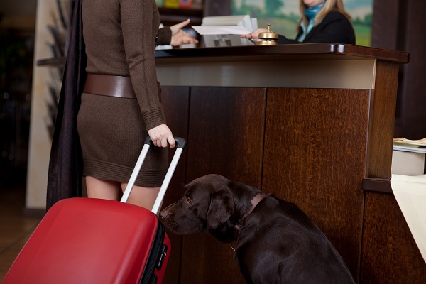 How Hotels Have Become Pet-Friendly During COVID-19
